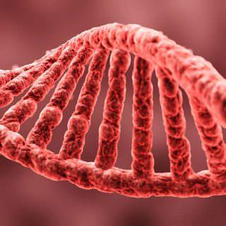 Tüm Bilgiler Yalan Oldu: DNA'lar Meğer Çok Farklı Çoğalıyorlarmış!