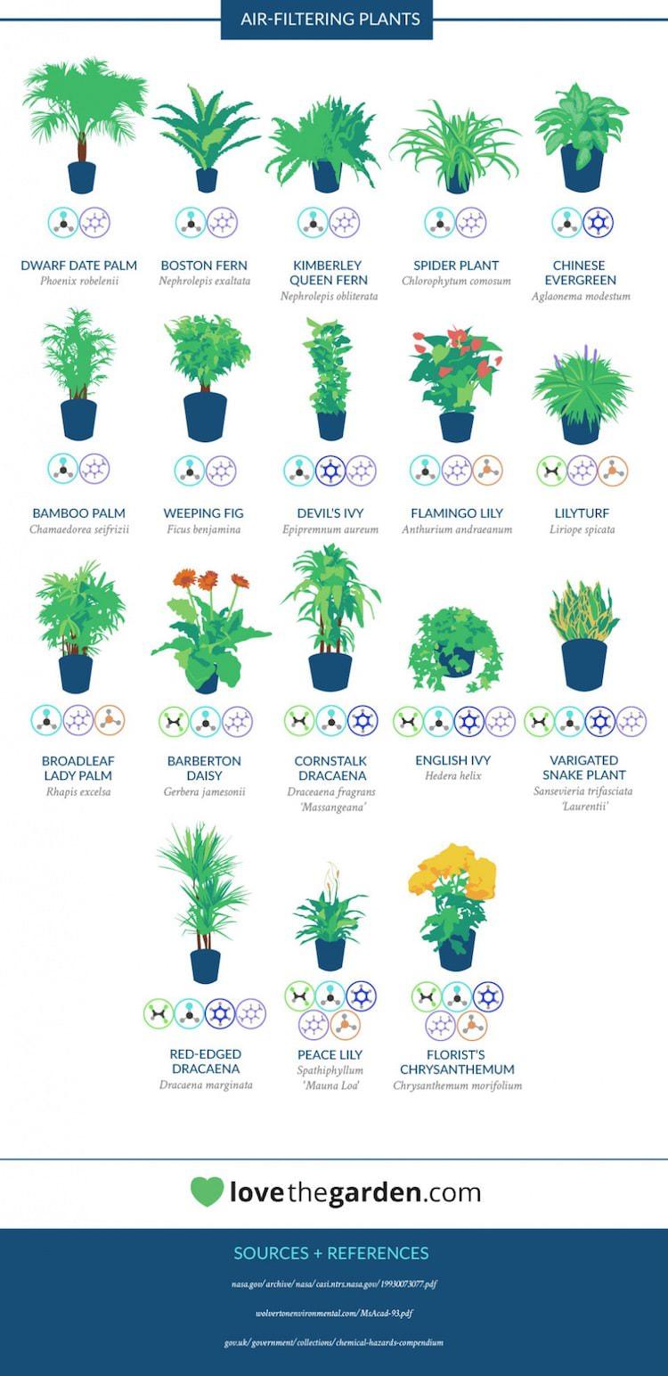 Havadaki kimyasal maddeleri azaltan bitkiler