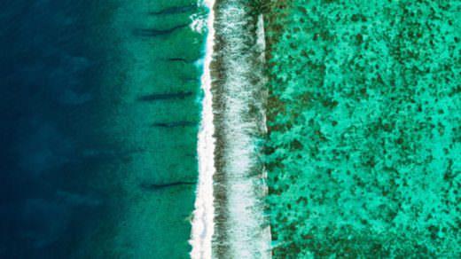 Muhteşem Karbon Emici: Büyük Bariyer Resifi