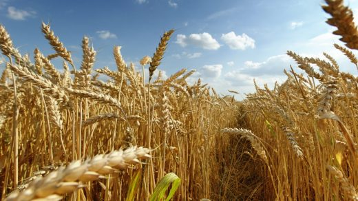 81 adet Tarım, Hayvancılık ve Çevre ile İlgili Belgesel Önerisi